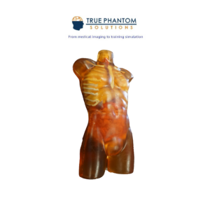 Adult Torso for X-ray CT