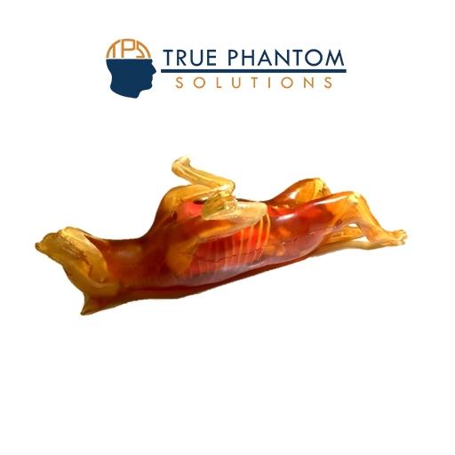 Dog-Phantom-transparent