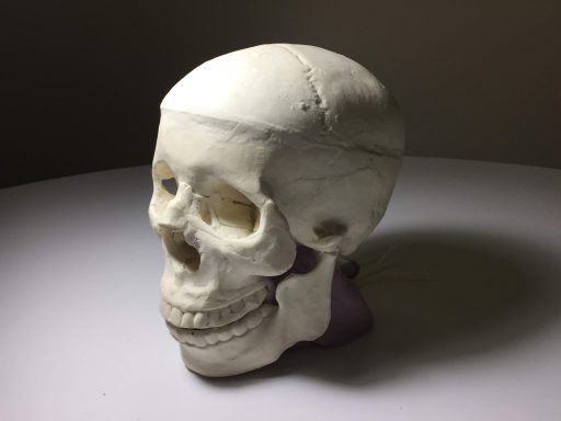 Skull Phantom for X-RAY