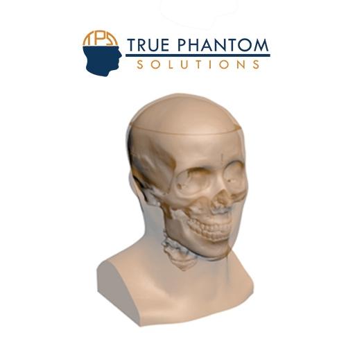 X-RAY MRI Training Head Phantom